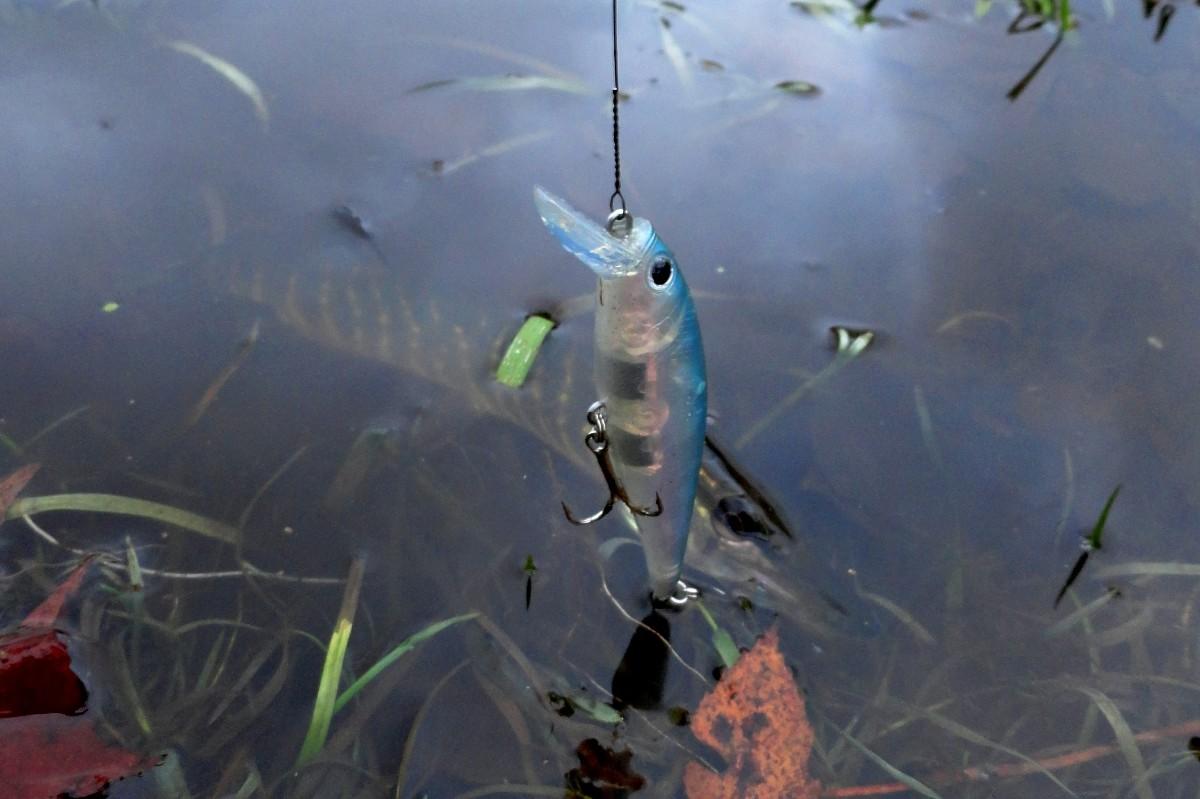 как ловит щуку в пруду