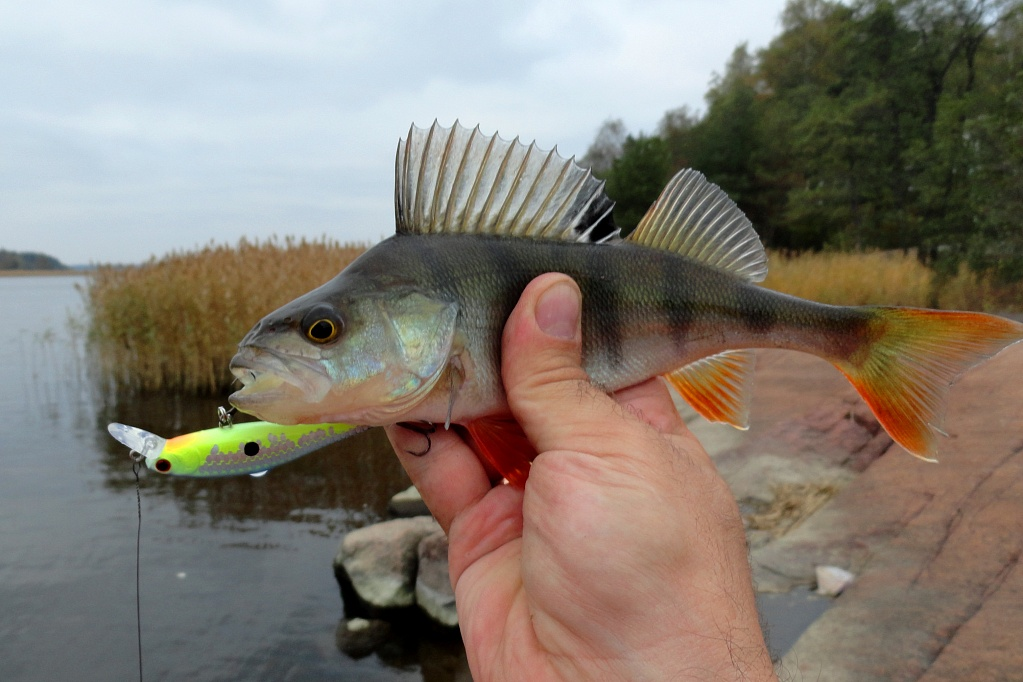 Perch Killer.<br /> Автор: <a class='ar2' href='/lcteam/member.php?ID=8302'>Алексей Никитин</a>
