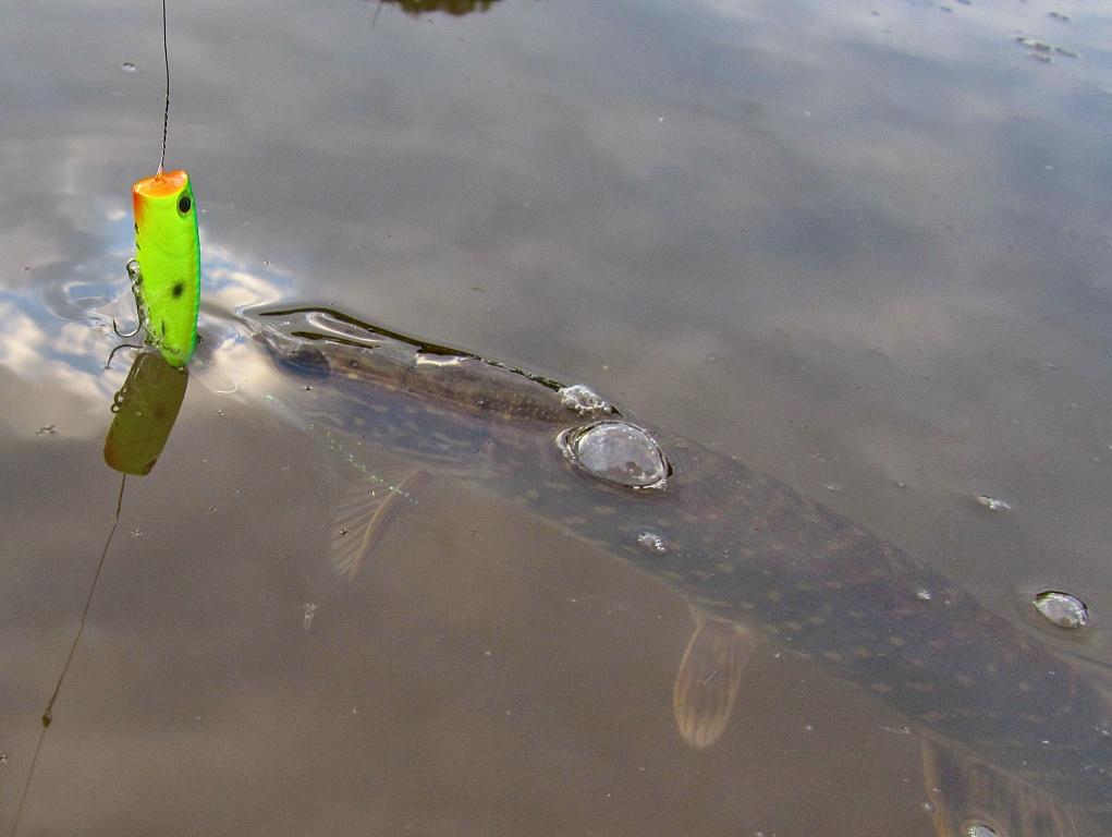 отзывы о приманке fish hungry
